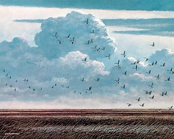 Geese Over Marsh