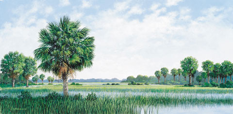 Palmettos In Marsh